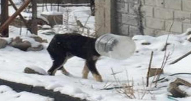 Kafası bidona sıkışan köpeği jandarma kurtardı...
