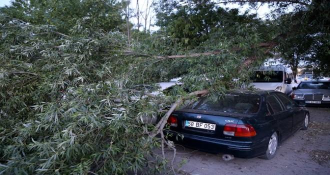 Kırılan ağaç dalı otomobillerin üzerine düştü...