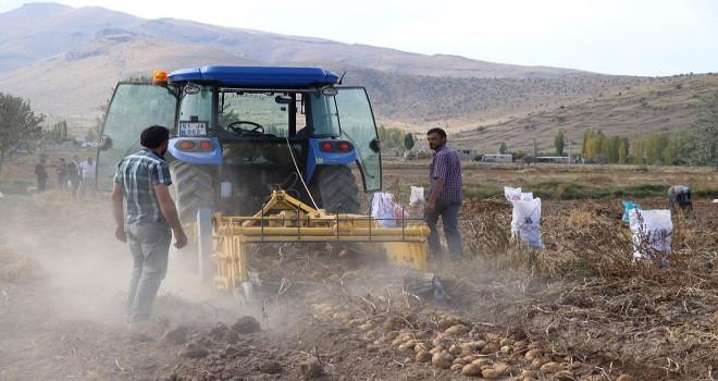 Yeni yerli patateste ilk hasat...