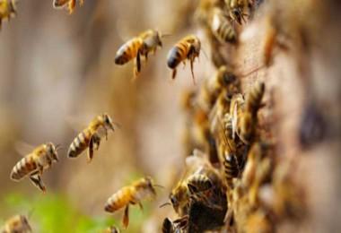 Okul bahçesinde öğrencilere arı saldırdı...