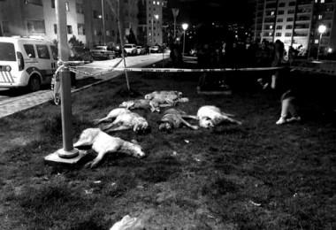Batıkent'te köpeklerin öldürülmesine dava