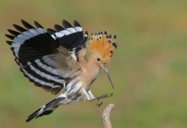 Nallıhan Kuş Cenneti Fotoğraf yarışması sonuçlandı…