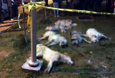 Batıkent'te sokak köpeklerini zehirleyenlere rekor ceza