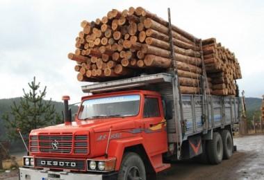 Orman ürünleri ihaleyle satıldı...