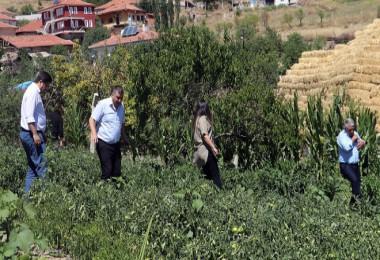 Keçiören'de organik tarım atağı...